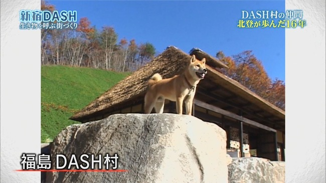鉄腕DASH DASH村 北登 永眠に関連した画像-03