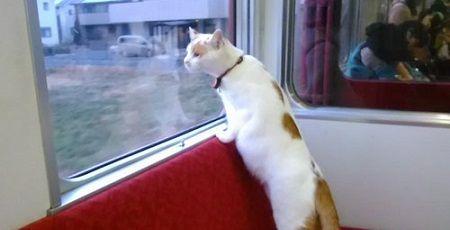 ねこカフェ列車 猫カフェ 電車 養老鉄道 こねこカフェSanctuary 大垣駅 池野駅に関連した画像-01