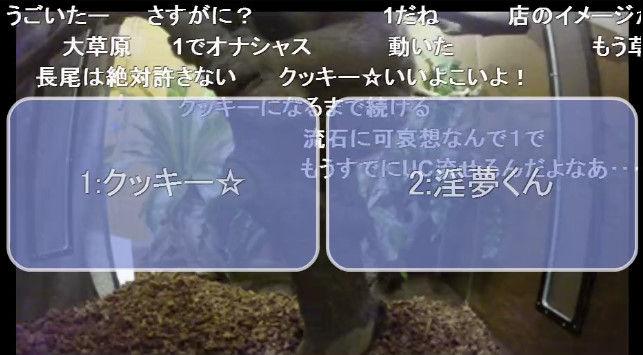 淫夢くん ニコニコ公式 スローロリス ニコニコ生放送に関連した画像-09