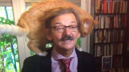 学者 インタビュー 猫に関連した画像-01