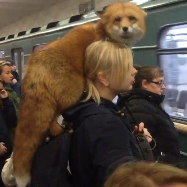 ロシア 地下鉄 キツネに関連した画像-05