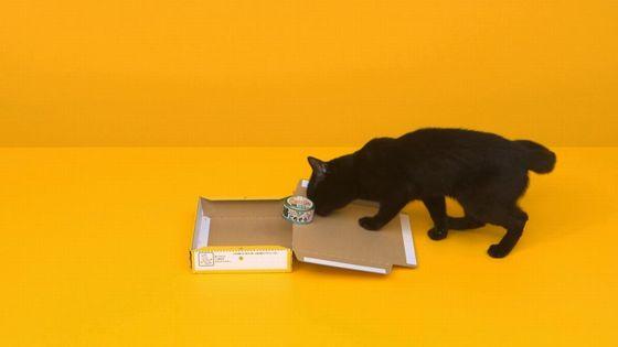 黒猫 組み立てに関連した画像-05