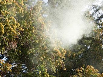 花粉 花粉症 ウェザーニューズに関連した画像-01