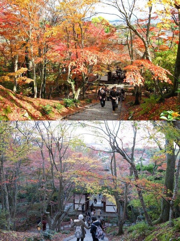 紅葉 ユルクヤル 京都に関連した画像-05