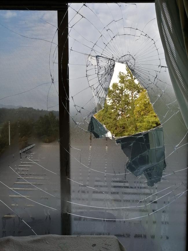 鳥 窓 ガラス 衝突に関連した画像-02