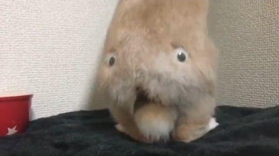 ウサギ 目ん玉 お尻に関連した画像-05