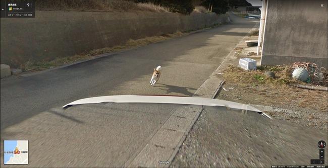 グーグル google ストリートビュー 犬 イッヌに関連した画像-05
