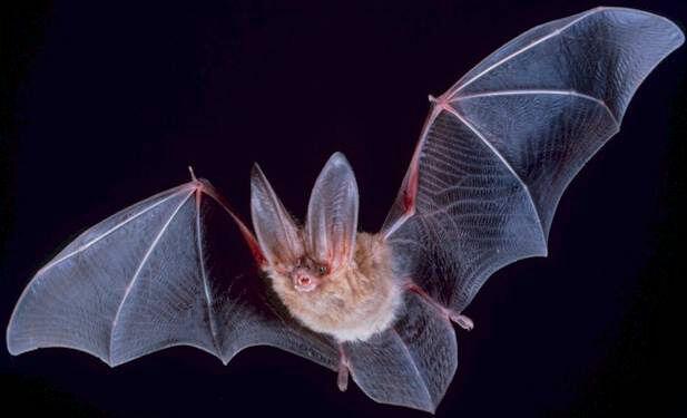 新型コロナウイルス 起源 コウモリ 中国 新種に関連した画像-01