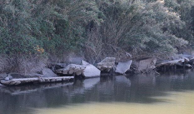 池の水ぜんぶ抜く 茨城県 潮来市 用水路 護岸崩壊 粗大ごみ 外来種に関連した画像-03