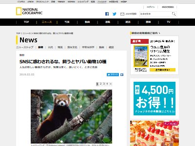 レッサーパンダ フェネックギツネ 激臭に関連した画像-02
