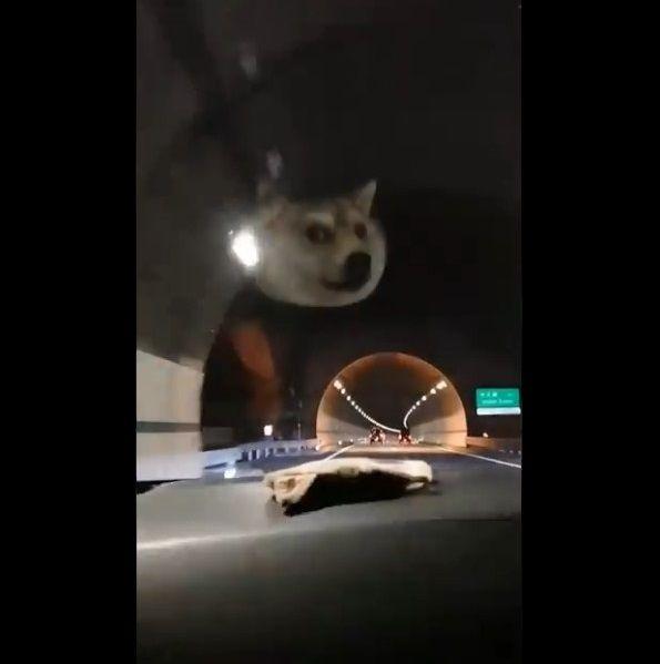 柴犬ポーチ ダッシュボード HUDに関連した画像-02