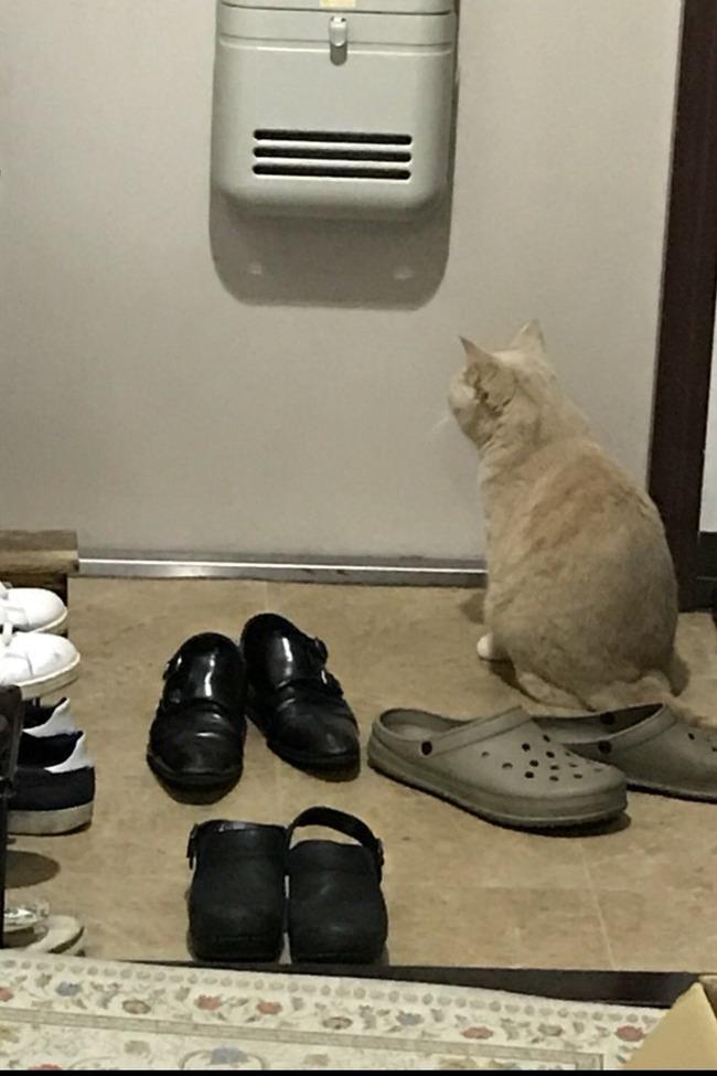 猫 可愛い 反応に関連した画像-03