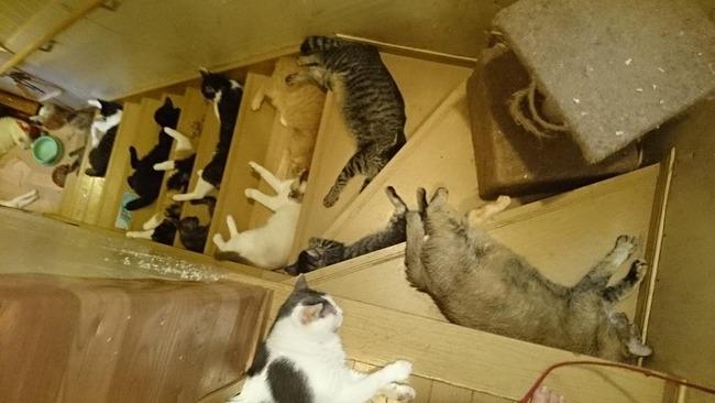 猫 階段に関連した画像-02