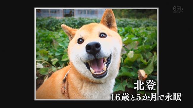 鉄腕DASH DASH村 北登 永眠に関連した画像-06