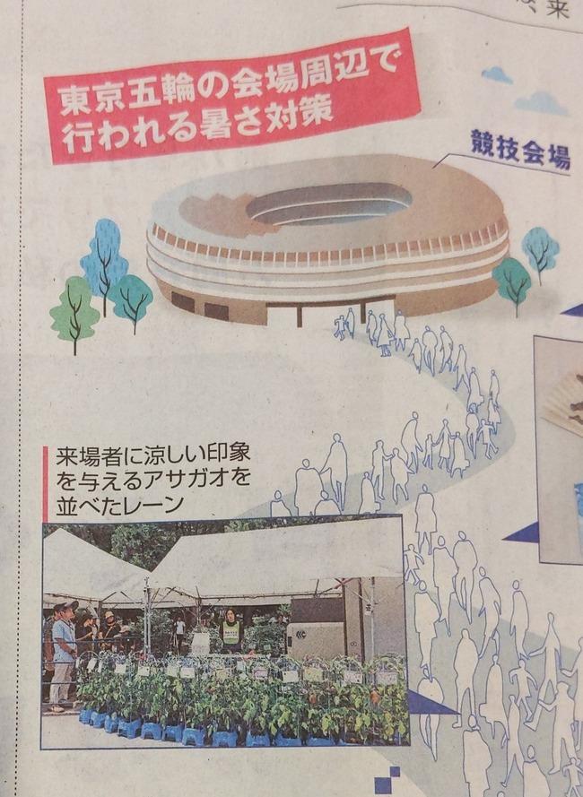 東京五輪 オリンピック 暑さ対策 アサガオ 朝顔 涼しい 視覚的に関連した画像-02