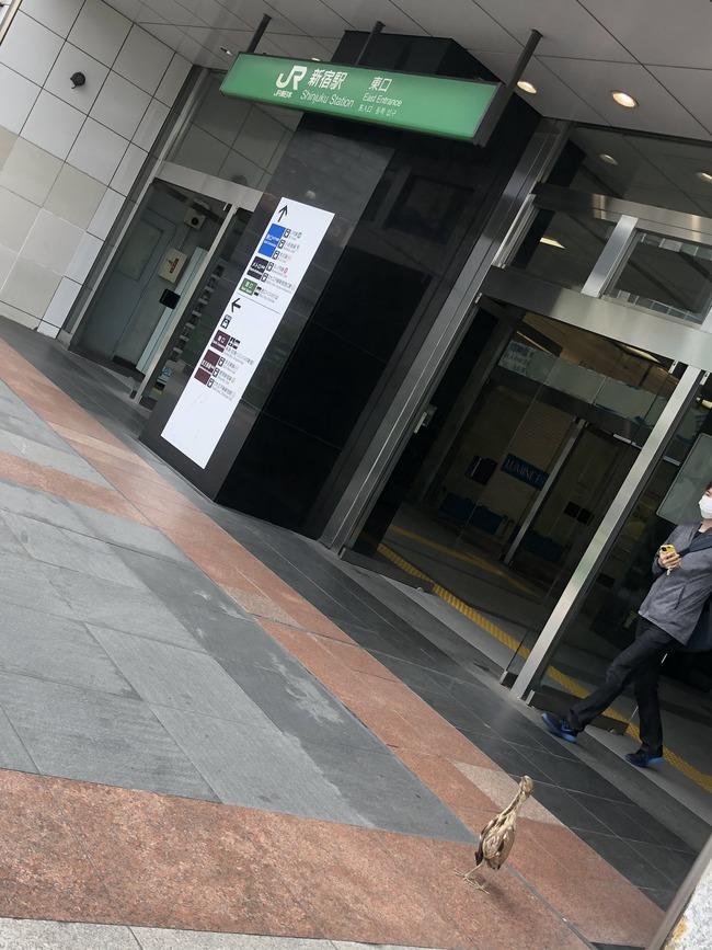 新宿駅前 ミゾゴイ 絶滅危惧種 レッドリスト サギに関連した画像-03