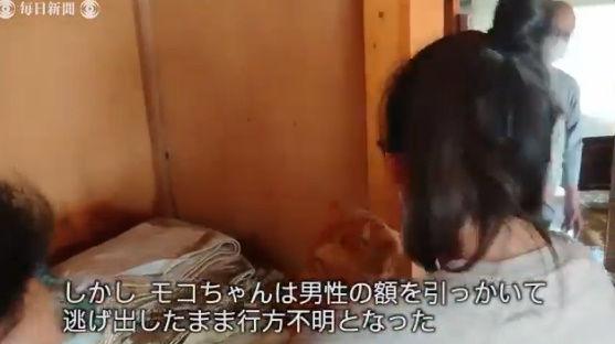 台風19号 猫 行方不明 再開 動画に関連した画像-06