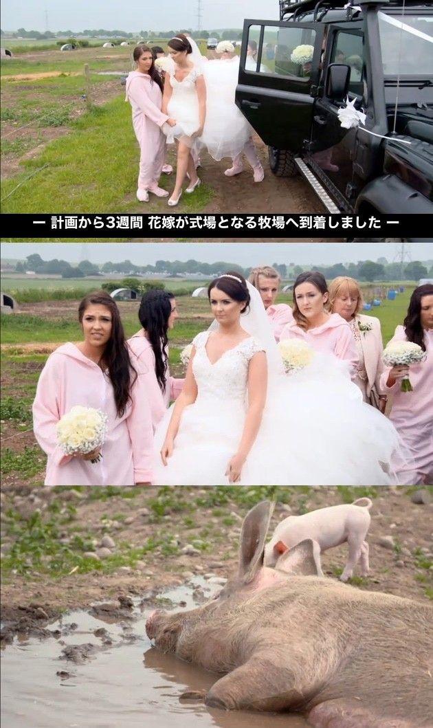 豚小屋 ブタ 結婚式 サプライズ 新郎 新婦に関連した画像-07