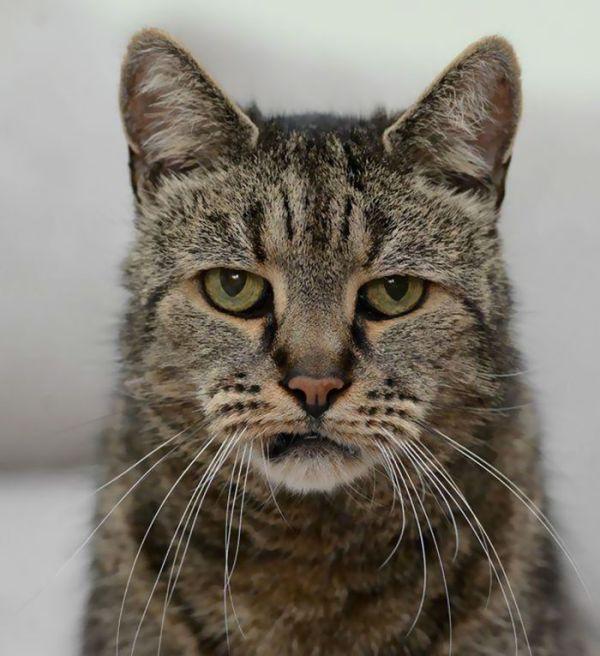 猫 ネコ 最長寿 脳卒中に関連した画像-03