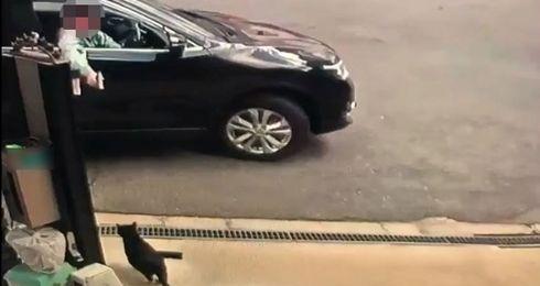 猫 エアガン 車 映像 監視カメラに関連した画像-01