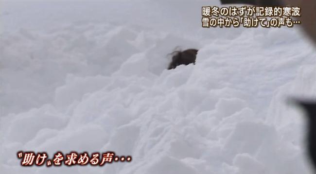報道ステーション 報ステ スタッフ 救助 雪に関連した画像-03