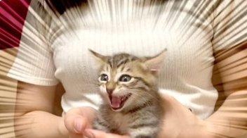 動物 YouTuber 猫 自演に関連した画像-01