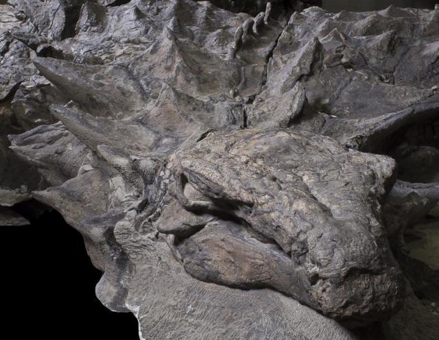 ミイラ化 恐竜 化石に関連した画像-04