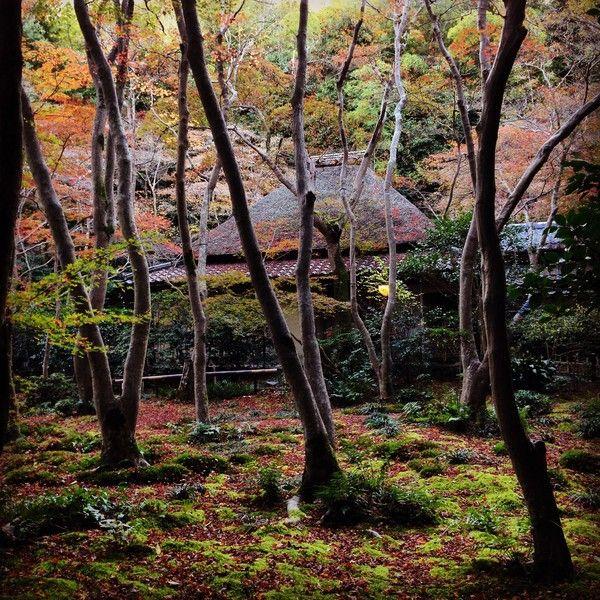 紅葉 ユルクヤル 京都に関連した画像-03