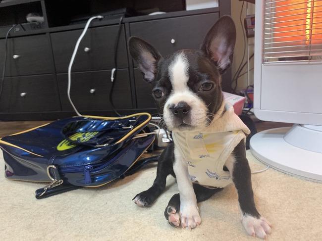 ふくれな えむれな YouTuber 犬 ペットショップ ボストンテリア 保健所 嘘に関連した画像-15