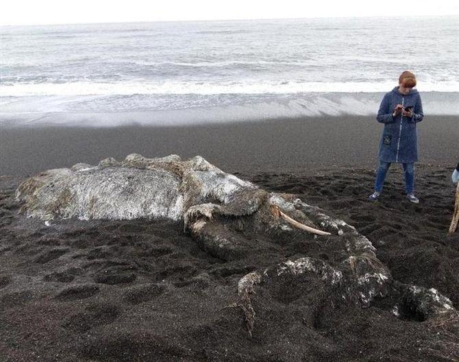 未確認生物 未知 ロイター通信 ロシア 海岸 漂着に関連した画像-04