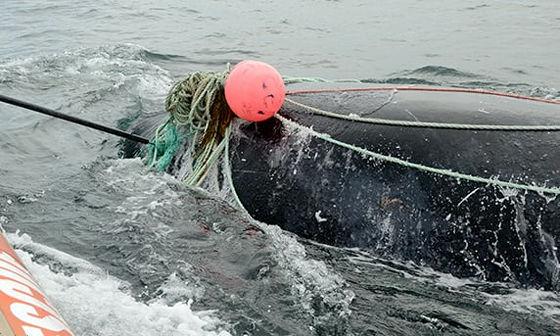 クジラ 救助 漁師 死亡に関連した画像-01