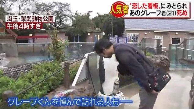 けものフレンズ けもフレ 東武動物公園 グレープ フルルに関連した画像-10