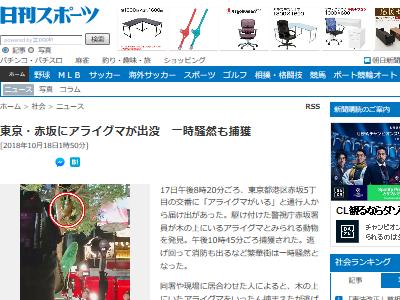 アライグマ 赤坂 動物 愛護 保護 殺処分に関連した画像-02