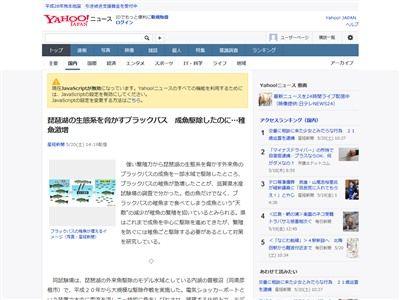 琵琶湖 ブラックバス 稚魚に関連した画像-02