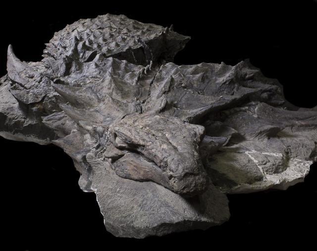 ミイラ化 恐竜 化石に関連した画像-03
