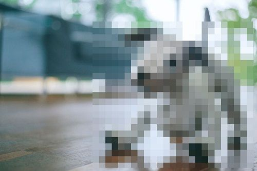 ソニー ロボット犬 aibo 復活に関連した画像-01