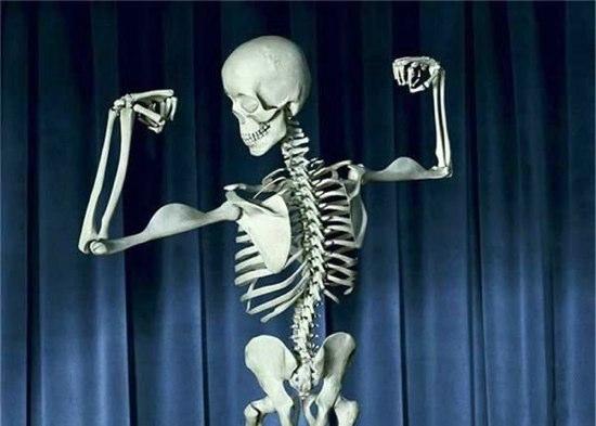 骨格標本に関連した画像-01