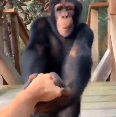 猿 人間 信頼関係に関連した画像-07