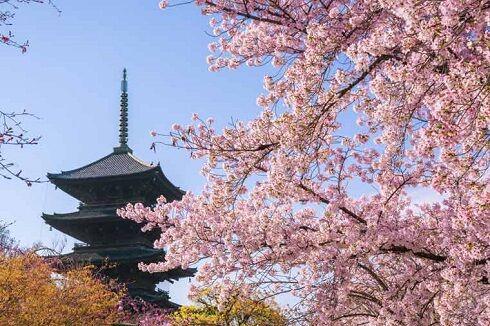 桜 日本 京都 アメリカ 歴史に関連した画像-01