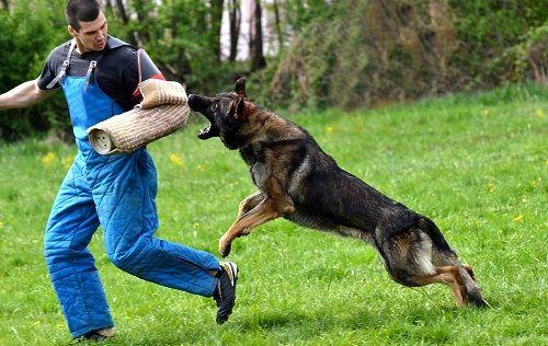 警察犬に関連した画像-01