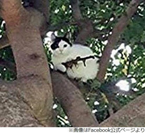 猫 銃 ライフル 警察 木の枝に関連した画像-03