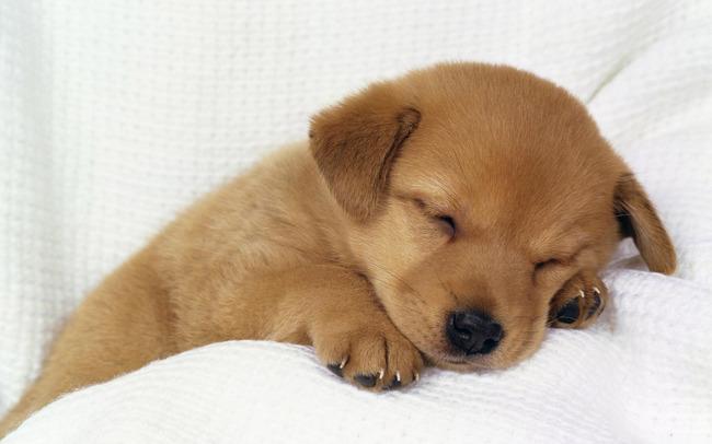 イギリス ネット購入 ペット 犬 猫 子犬 保護施設 カップル 手放すに関連した画像-01