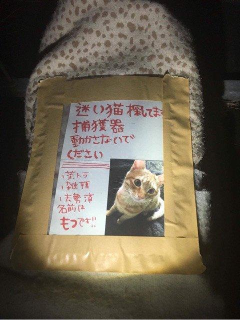 ネコ 誘拐に関連した画像-02