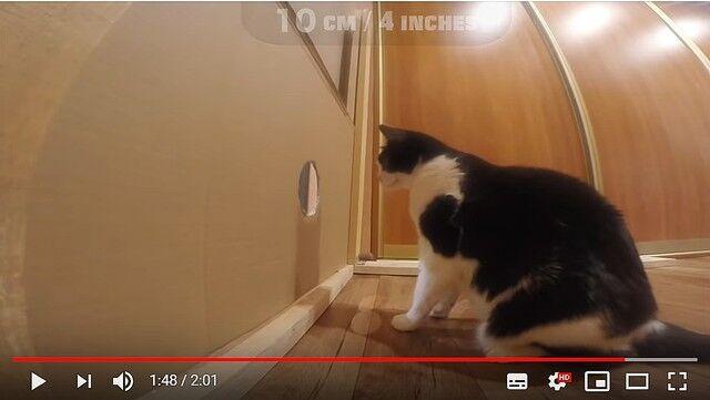 猫 穴 ダンボール 検証 動画に関連した画像-05