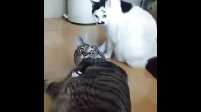 猫 喧嘩 仲裁に関連した画像-08