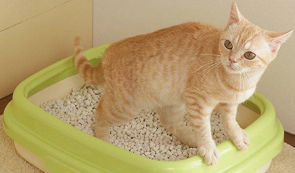 ペット トイレ 砂 猫砂に関連した画像-01