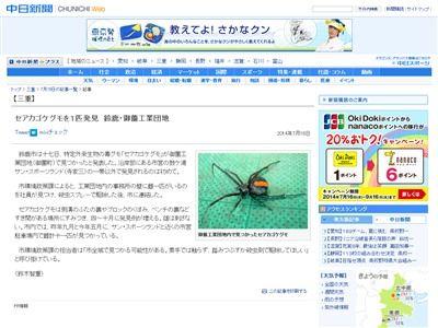セアカゴケグモ 毒グモに関連した画像-02