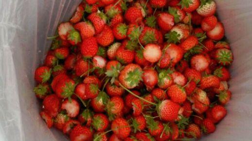 イチゴ 農家 ツイート もったいない 廃棄に関連した画像-01