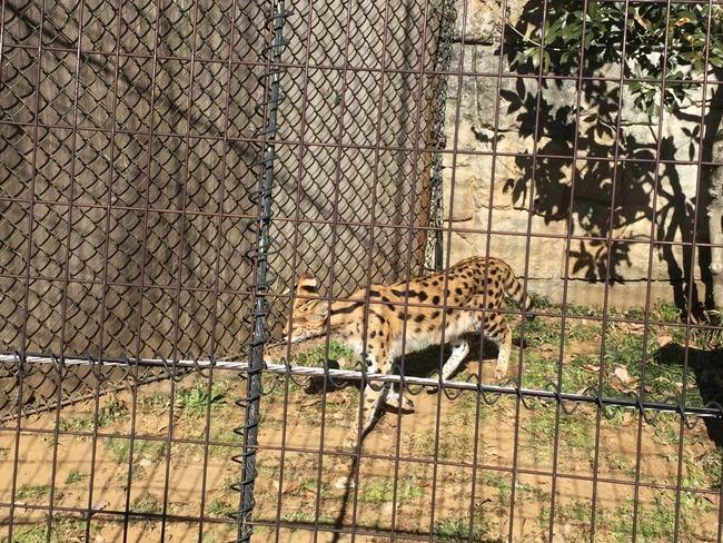 けものフレンズ 多摩動物公園 聖地巡礼 オタク サーバルに関連した画像-03