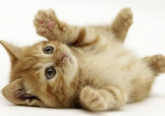 猫 不動産屋 イギリス ロンドン 野良猫 家 史上初に関連した画像-01